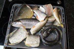 Hecht-Karpfen-Aal-Forelle-Barsch in Stücken