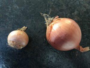 große und kleine Zwiebel-Die frau am grill
