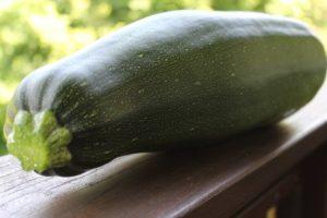 so sehen frische Zucchini aus